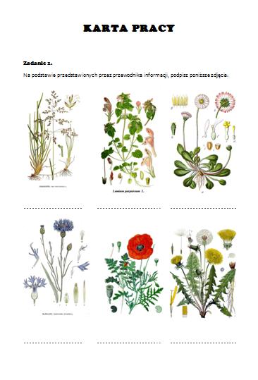 Rosliny Lakowe Karty Pracy Szukaj W Google Plants