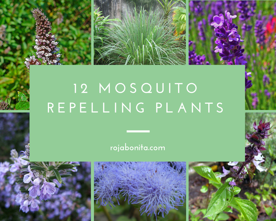 Chemical Free Protection 12 Mosquito Repelling Plants Mosquito