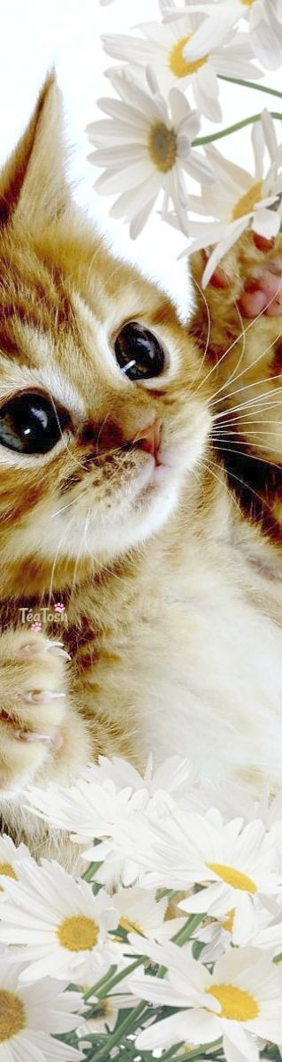 Impressive Cute Cats For Sale In Dubai Valuable Animaux Mignons Chats Et Chatons Photo Animaux