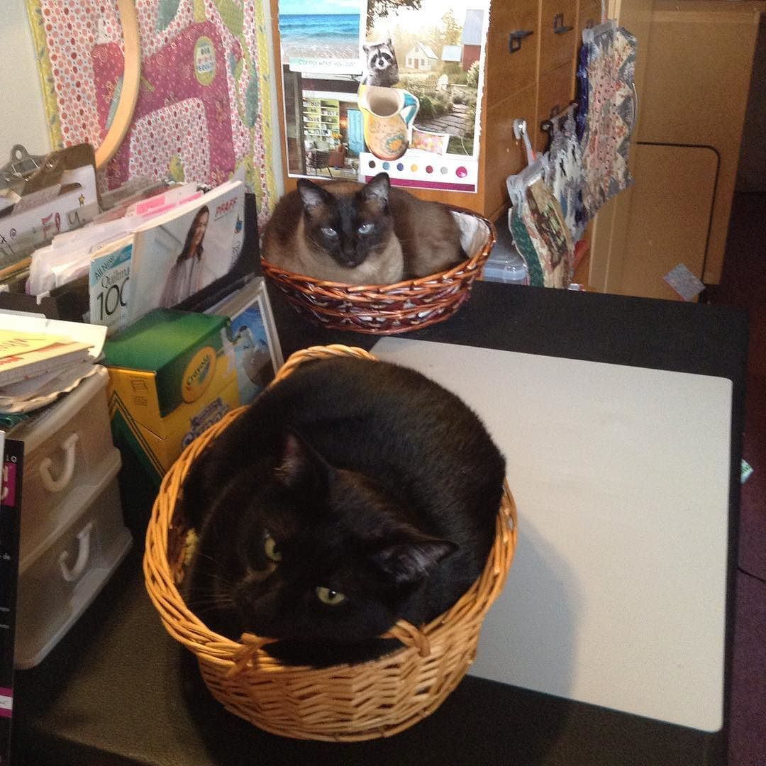 Two baskets = twice the cats! #cats_of_instagram #studiocats