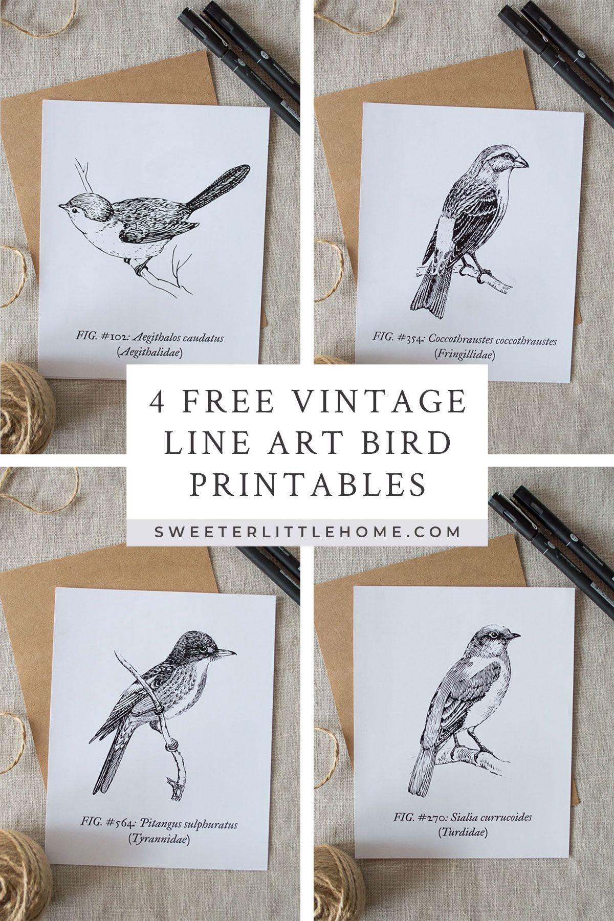 Free Printable Vintage Bird Line Art Vintage Birds Printable
