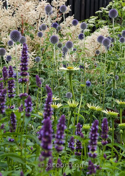 Garden Designs Ideas 2018 Herbaceous Border Easy Herbaceous Border To The Sandy Soil And Full Sun Al Garden Shrubs Herbaceous Border Purple Garden
