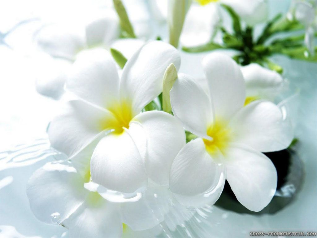 Beautiful wallpapers and images of flowers - Worlds Top Beautiful Flowers Images Wallpaper Photos Free