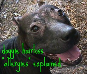 This Is My Previous Dog Scout She Suffered Allergies And