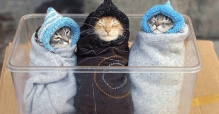 How To Make A Kitten Burrito Aka Purrito In 2020 Cute Little Animals Kitten Purrfect