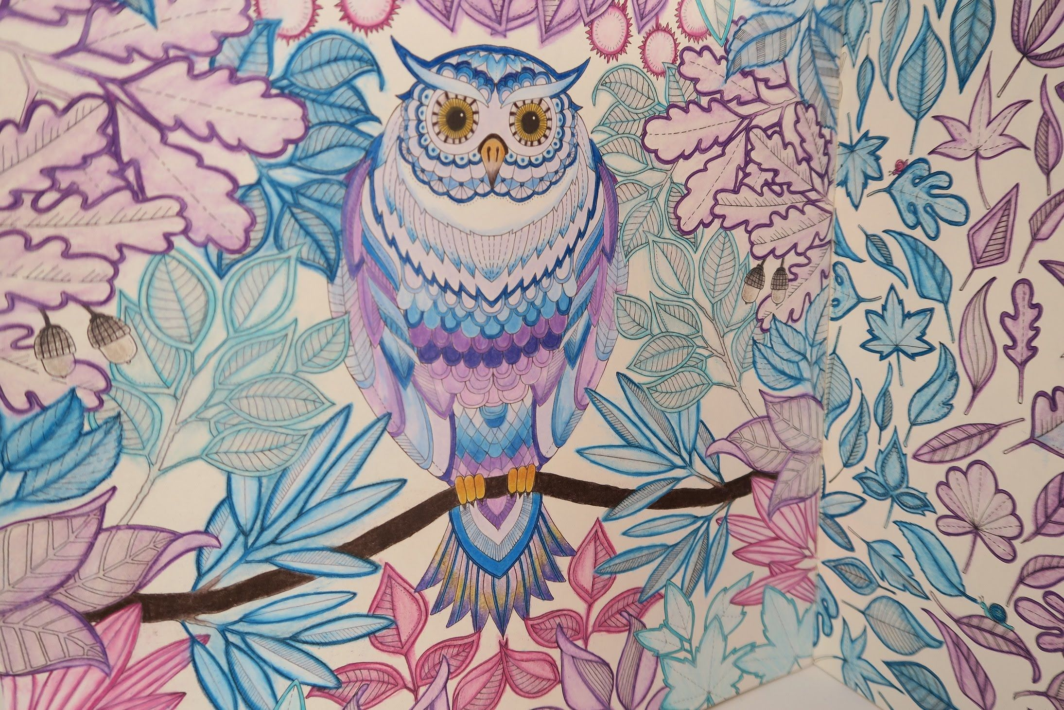 Youtube coloring book - Secret Garden Coloring Book Owl Finished Result Youtube