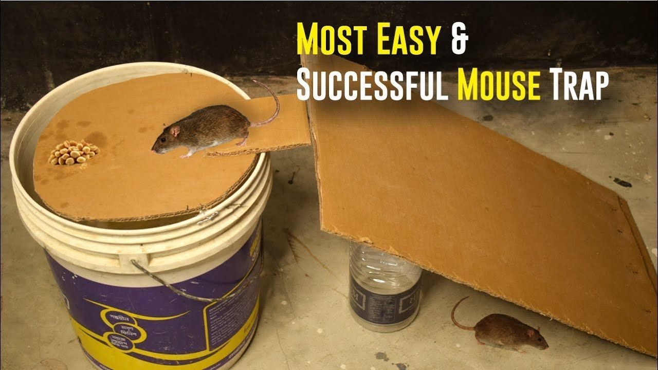 Bucket Mouse Trap/ Most Easy and Successful Mouse Trap | Paper Mouse Trap #mousetrap Bucket Mouse Trap/ Most Easy and Successful Mouse Trap | Paper Mouse Trap #mousetrap Bucket Mouse Trap/ Most Easy and Successful Mouse Trap | Paper Mouse Trap #mousetrap Bucket Mouse Trap/ Most Easy and Successful Mouse Trap | Paper Mouse Trap #mousetrap