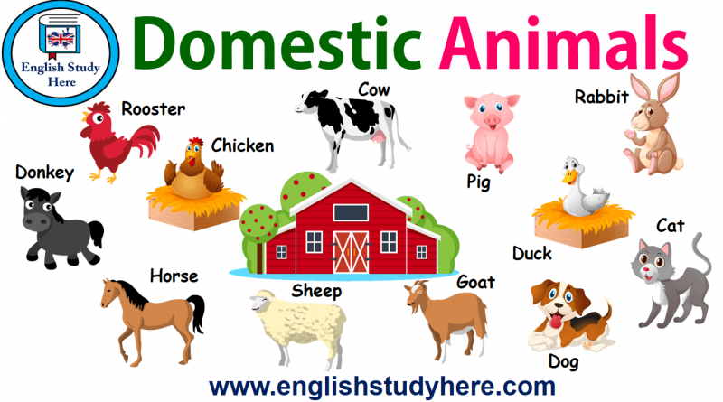 Pictures Of Domestic Animals