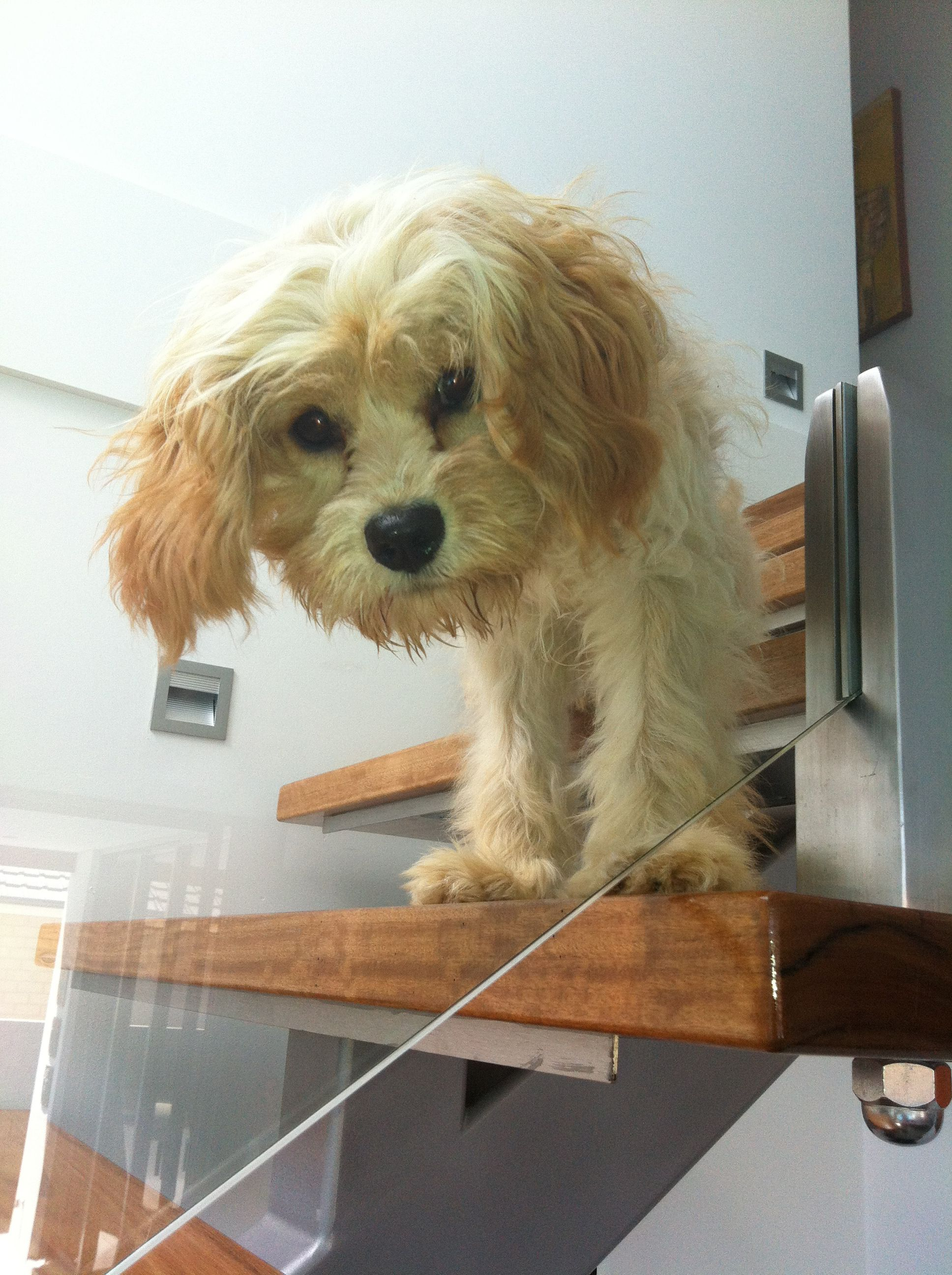 We found our own little cuba - Indi on the stairs!
