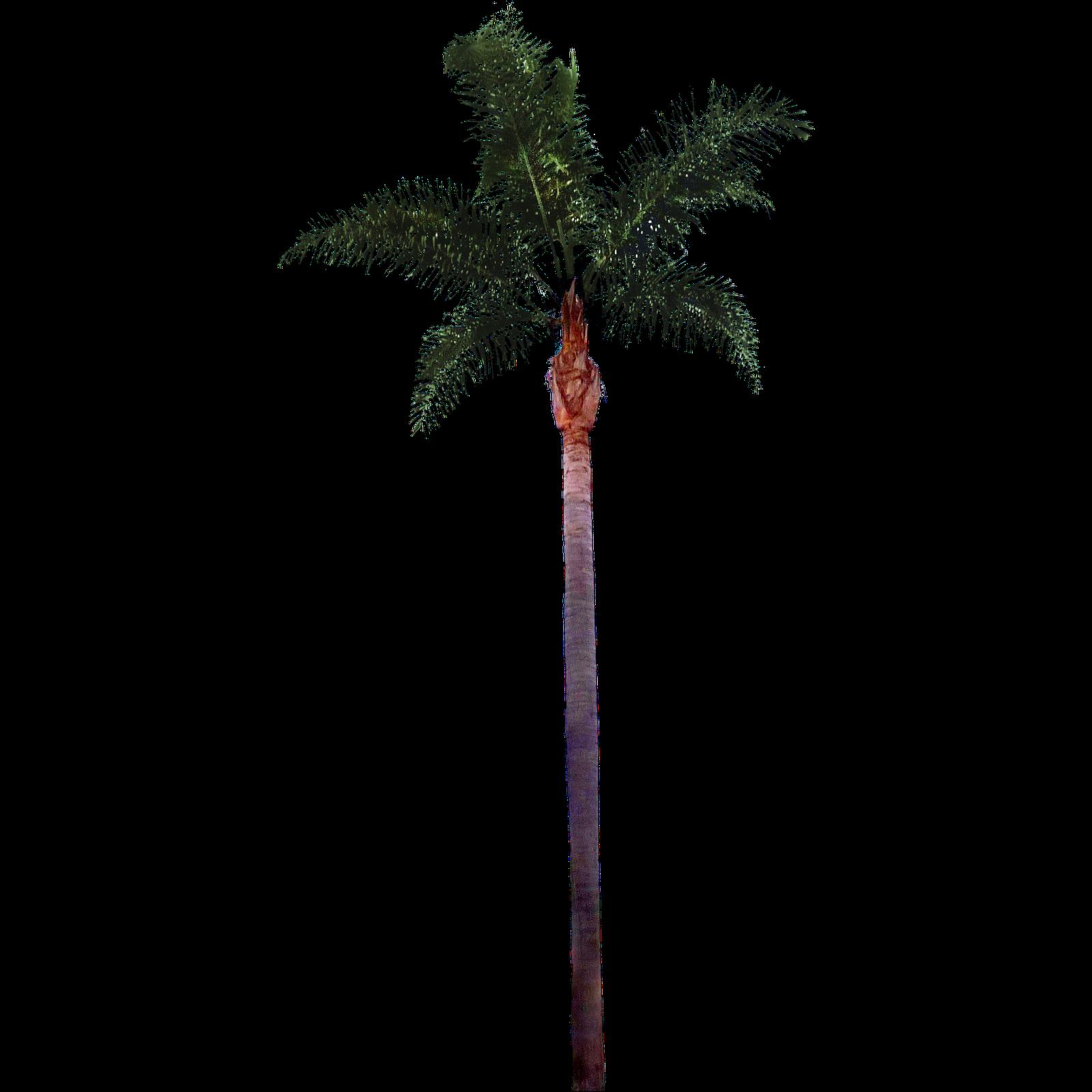 palm tree2 png  1600 u00d71600