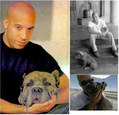 Vin And His Pit 2 Hunks In One Pic Pitbull Kingdom S Photo
