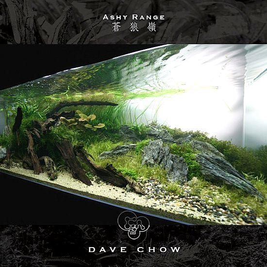 ADA Contest 2007 : World Ranking No.1-27 | Aquarium