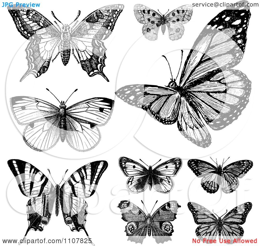 clipart retro black and white vintage butterflies 1 royalty free