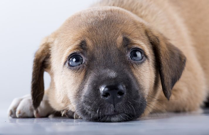 Help My Puppy Threw Up Now What Puppies Dogs Pinterest