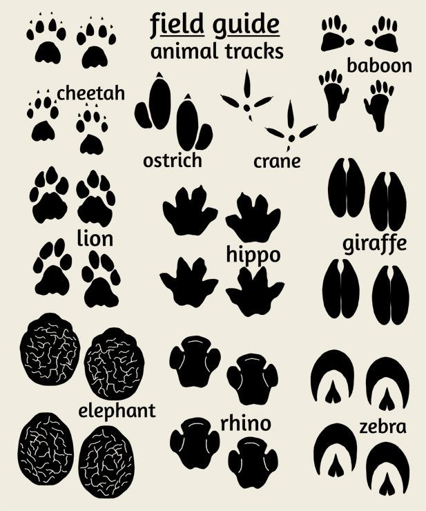 Impertinent image for printable animal footprints