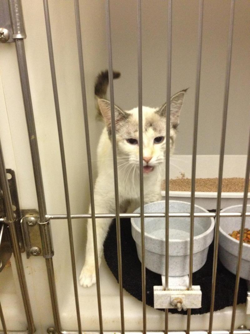 Jasper county animal control urgent meet sandy a