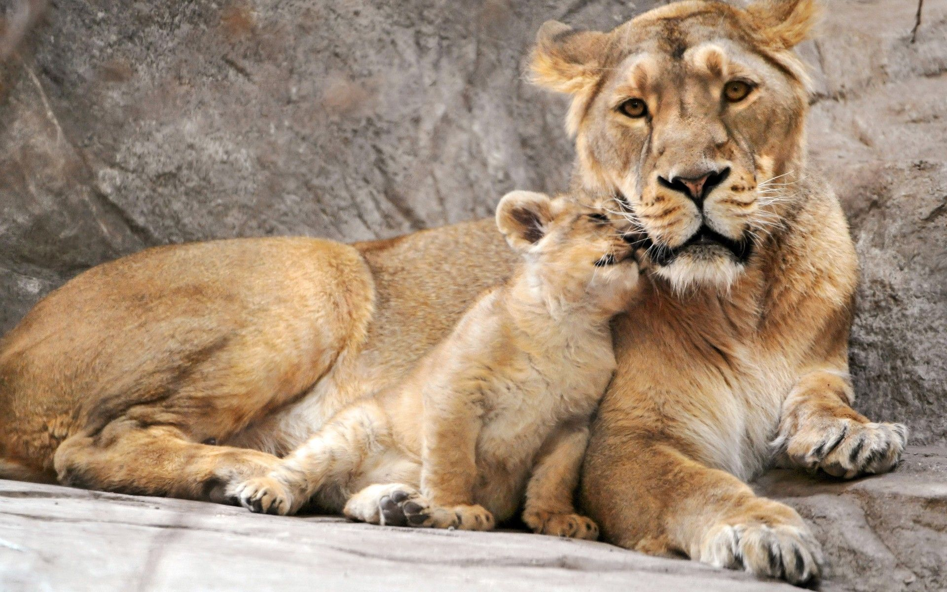 View source image godus amazing animals pinterest