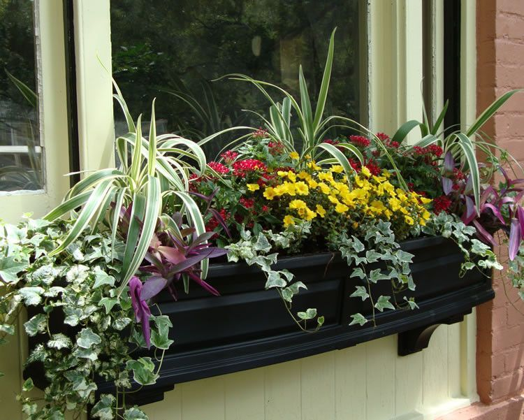Order Mayne Nantucket 5' Window Box from Yardify. Free Shipping & Insurance on all of our Nantucket 5' Window Box SKU # 4832. Order today from Yardify.com!