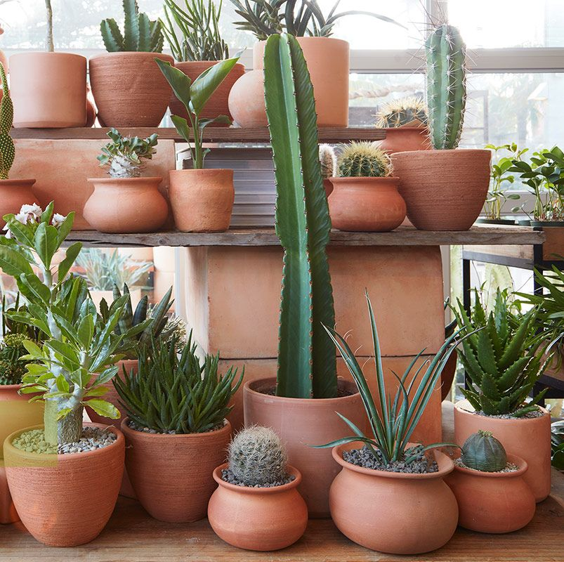 Arizona Pottery Sells All Shapes Sizes And Styles Of Real Terra Cotta Clay Flowerpots And Garden Planters Ari Arizona Pottery Clay Planters Garden Pottery