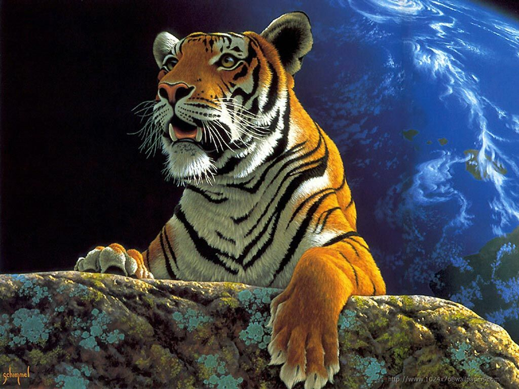 tiger hd wallpapers free download tiger pictures images | hd