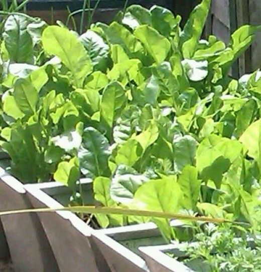 Growing Vegetables In Pots How To Grow Shade Loving 400 x 300