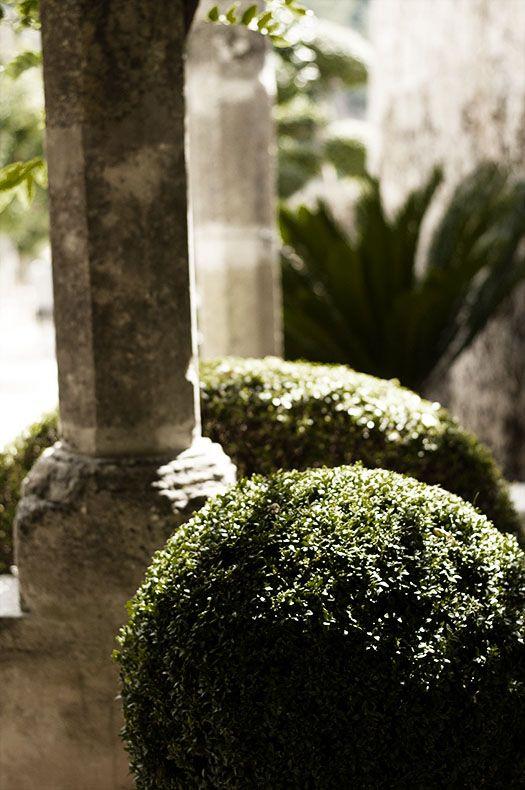 Alfabia garden