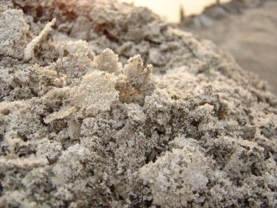 Salt In Soil: Reversing Soil Salinity - The effects of salinity in soil can make it hard to garden. Salt in soil is harmful to plants, which leaves many gardeners affected by this problem wondering how to get rid of salt in the soil. Are there steps to reversing soil salinity?