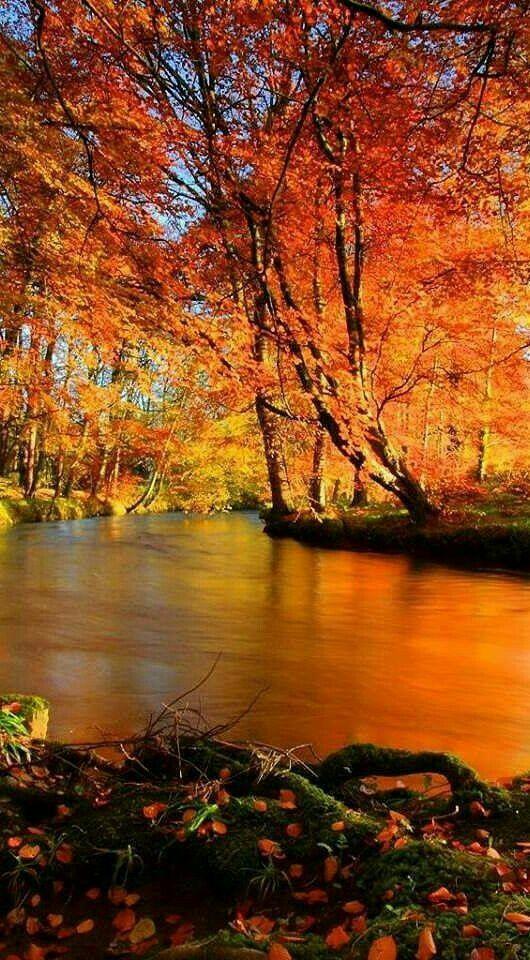 Goldener Oktobertag