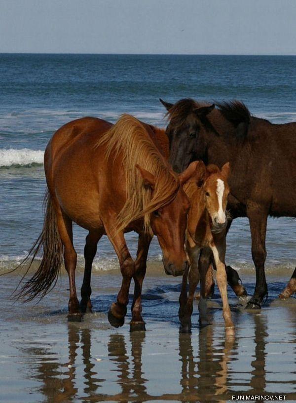 Horses at the beach...