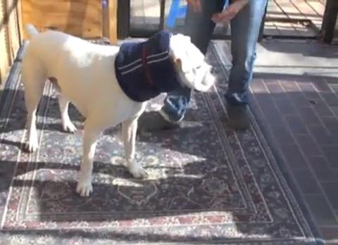 Towel Elizabethan Soft Collar Diy Dog Collar Dog Cone Diy Dog Stuff
