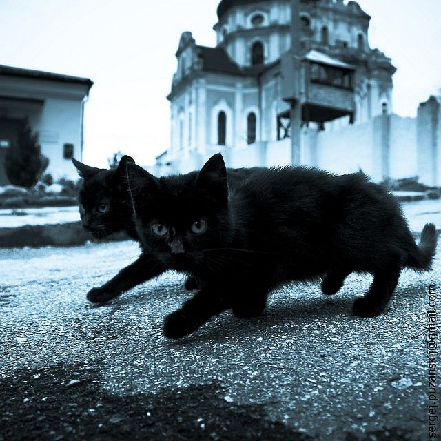 One is another's shade | Cats, Christmas cats, All black cat