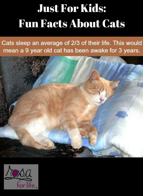 Just For Kids Fun Facts About Cats Fun facts, Fun facts