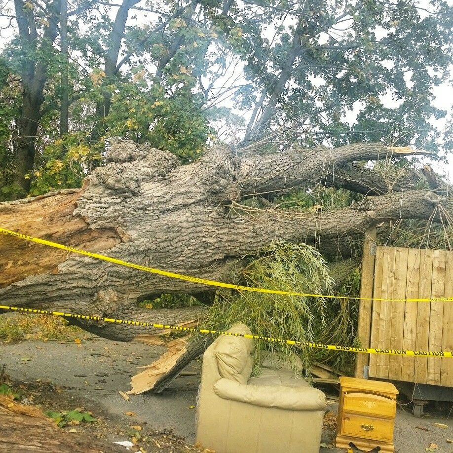 Check out this pic you may think twice about having hazardous trees and limbs we can help you call us for a free estimate 647-545-8733