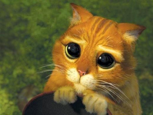 """Résultat de recherche d'images pour """"chat potté yeux doux"""""""