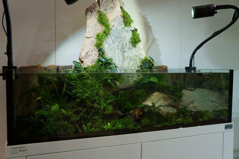Habt Ihr Euch Auch Schon Mal Gefragt Worin Eigentlich Der Unterschied Zwischen Einem Riparium Einem Paludarium Und Ei Regenwald Terrarium Aquarien Aquascaping