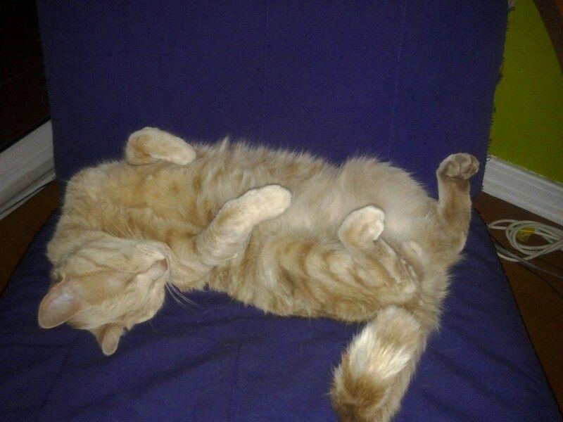 Canela durmiendo en su silla