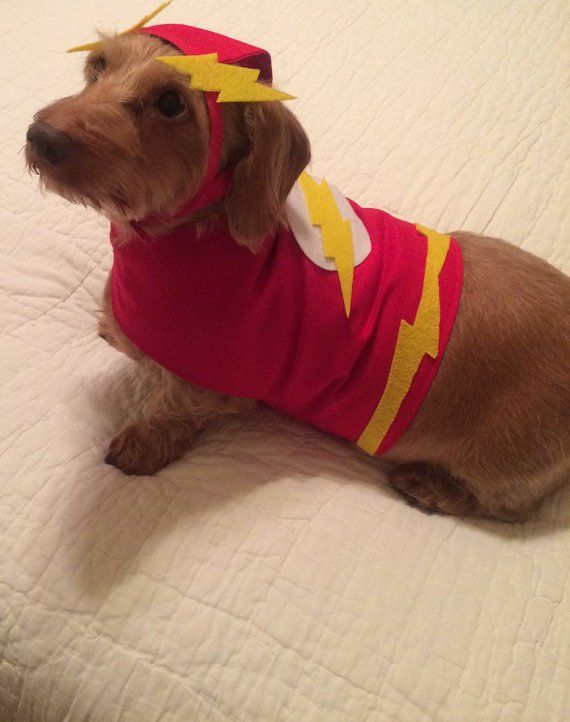 The Flash Diy Dog Costumes Dog Halloween Dog Costumes