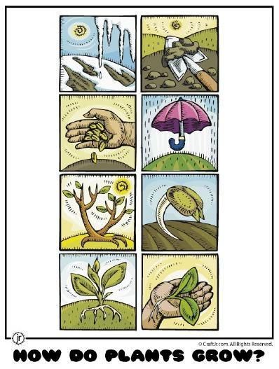 Spring Plants and Gardening Kindergarten Lesson Plan