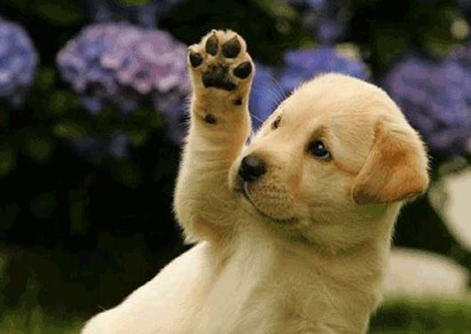 Hello animals pictures and quotes | Sweet puppy wants to say ...