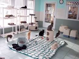 Image result for rooms for cats