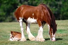 At Resimleri Ile Ilgili Görsel Sonucu At Horse Atlar Ve Hayvanlar
