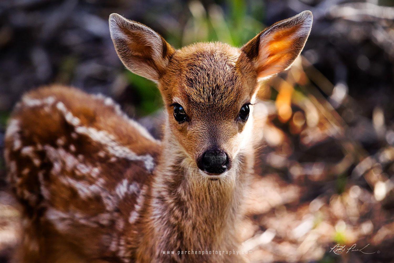Baby Deer Wallpaper 1080p Lql Wild Desktop Hd Wallpapers Baby Animal Names Baby Animals Baby Deer