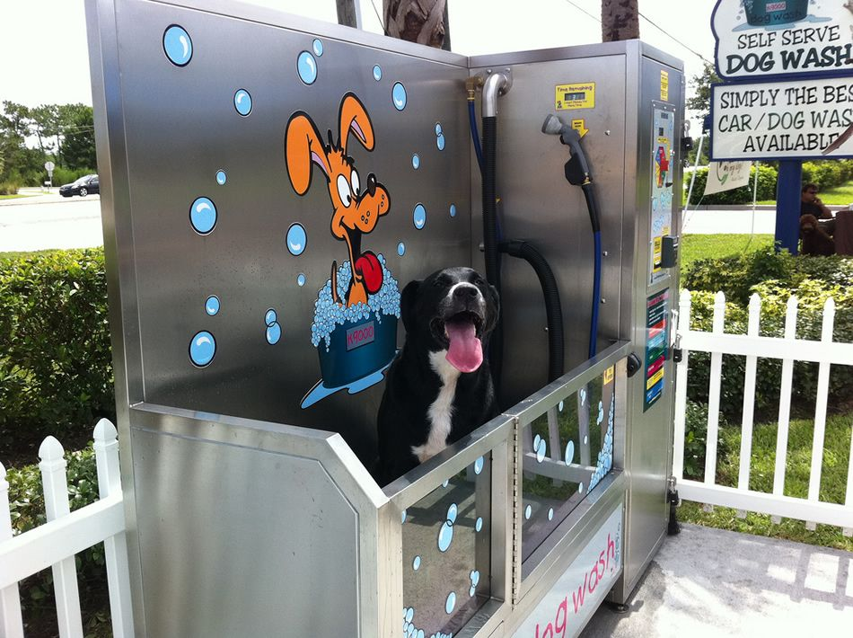 Dog washing station love this eport pinterest dog washing dog washing station love this solutioingenieria Image collections