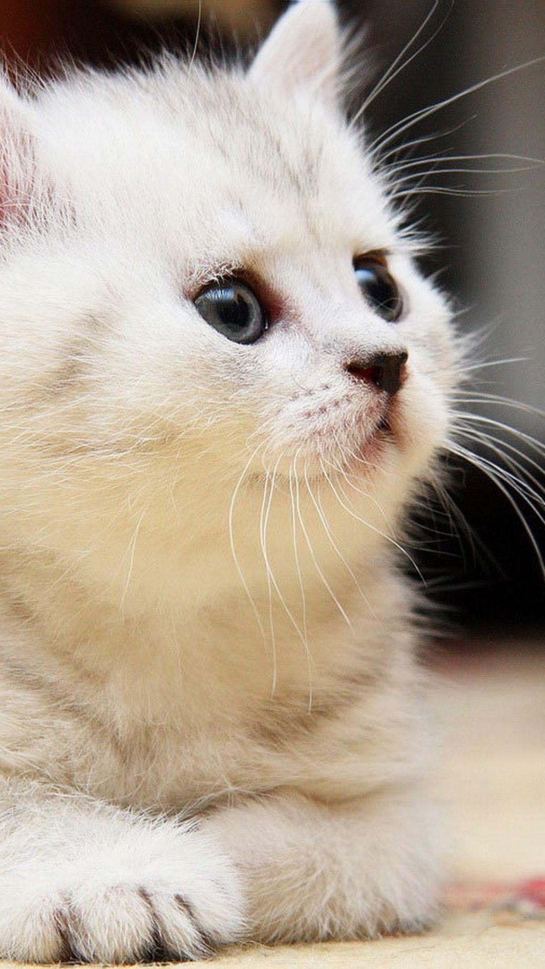 Kitten Fluffy Face Kid Playful Cute Fluffy Kittens Cute Cat Wallpaper Kittens Cutest