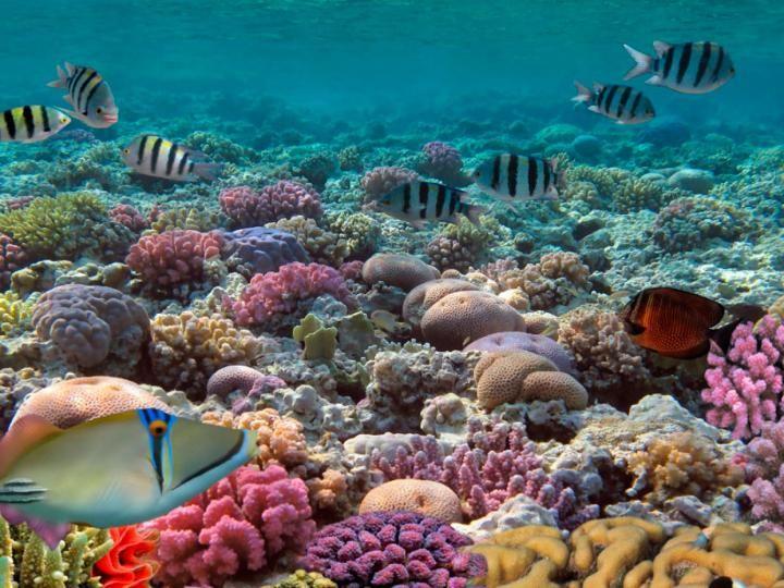Con el Tour Xnorkeling disfrutarás de un increible snorkel en Puerto Morelos, en dos arrecifes distintos. Reserva ahora con MexFun.