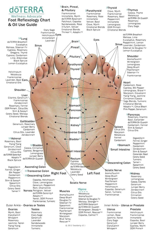 10 Pack - MINI Essential Oil Reflexology Chart & O