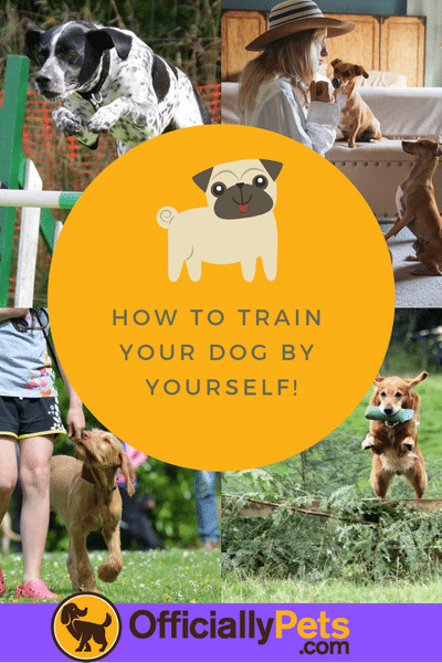 Brain Training For Dogs Review A Detailed Analysis By A Certified Dog Trainer Check Out The Brain Train Training Your Dog Dog Training Training Your Puppy