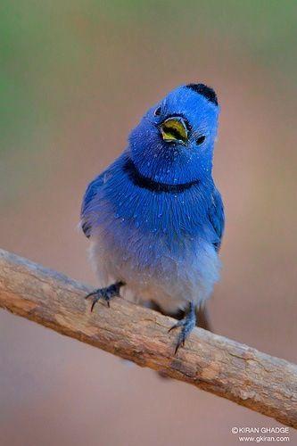 Oo am I blue