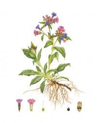 Botanical Studies Botanical All Plants Floral