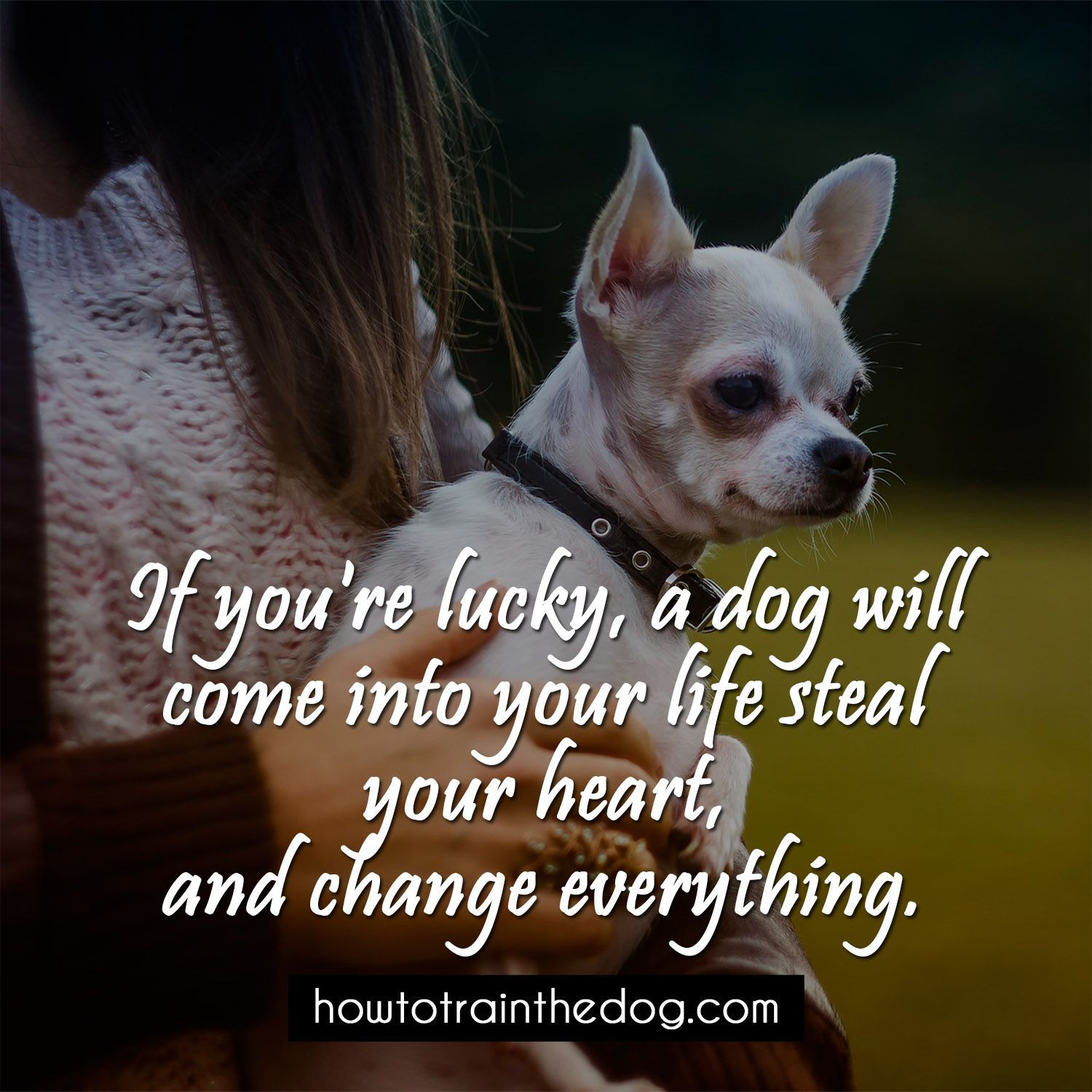 Quotes About Dog Friendship If You're Lucky A Dog Will Come Into Your Life Steal Your Heart
